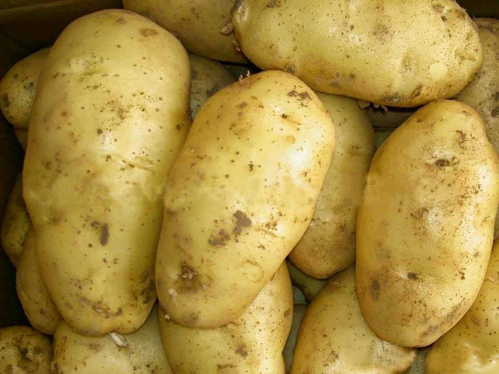 Phát điện từ củ khoai tây